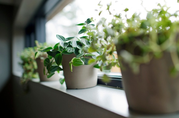 Det frisker opp med grønne planter på badet!